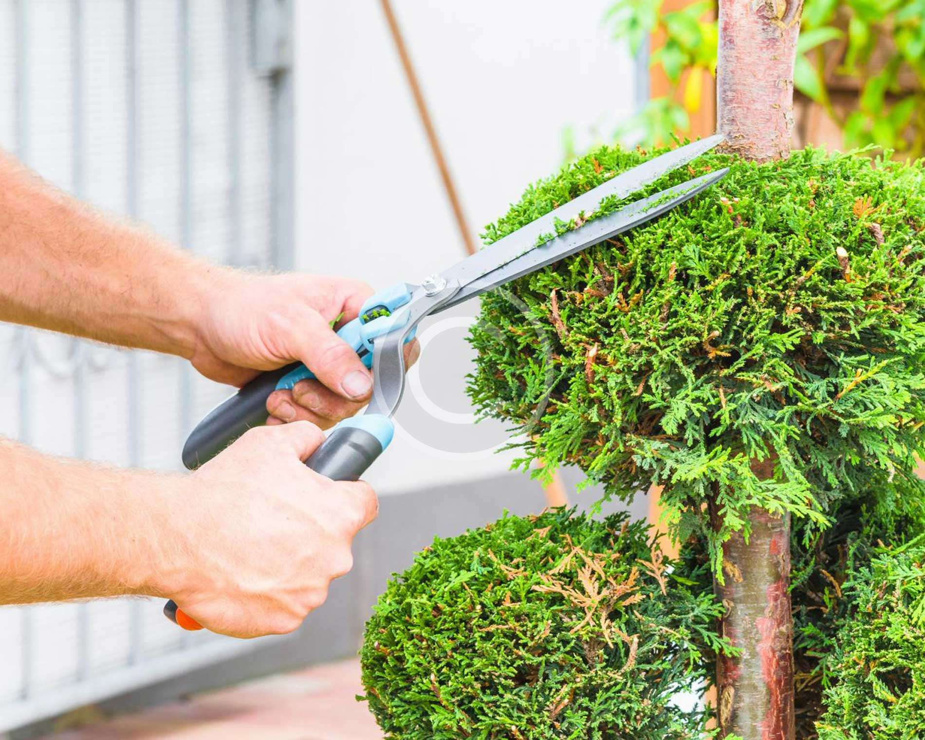 Proven Fact: Gardening Helps Immune System
