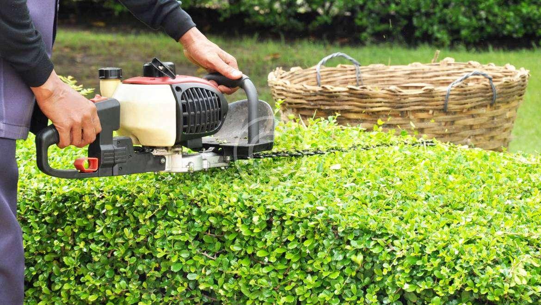 Gardening Calendar: What to do in November